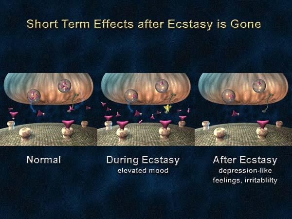 Действие экстази на организм вскоре после его выведения из  него